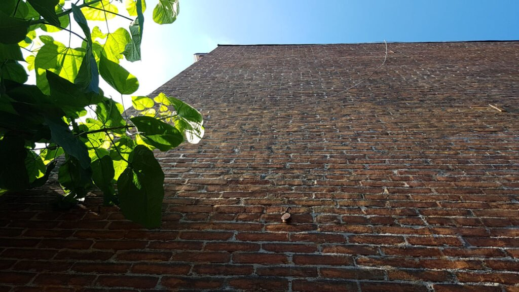 A large historic masonry wall damaged by scam pointing