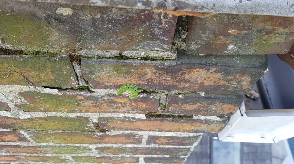 moss-brick-mortar